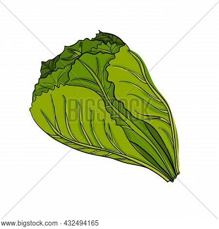 Vector Illustration Bunch Of Green Salad Using Shades Of Green And Outline.
