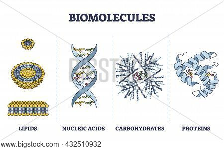 Biomolecules Or Biological Molecules Type Collection In Outline Diagram. Labeled Educational Lipids,