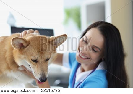 Smiling Veterinarian Doctor Conducts Physical Examination Of Dog