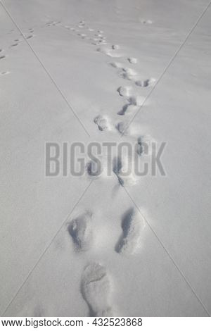Footprints In Snow. Human Footprints In The Snow. Winter Landscape
