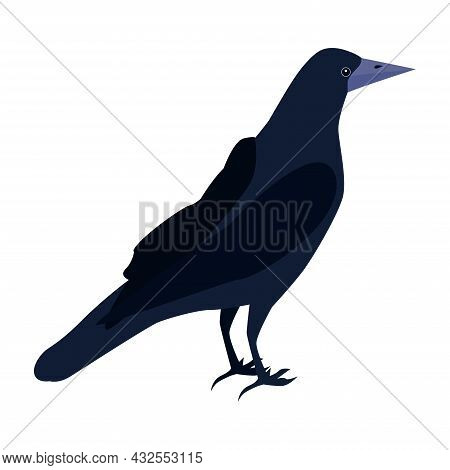 A Black-and-blue Rook Bird With A Gray Base Of The Beak