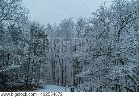 Heavy Snow Falling Covering The Tree Branches Quickly With Big Snowflakes On A Grey Gloomy Day In Wi