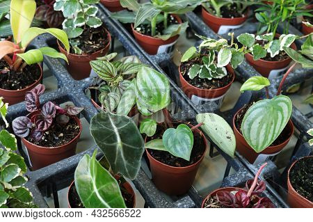View Of Tiny Mixed Tropicals In Small Pots