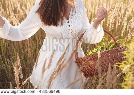 Woman Picking Herbal Flowers. Herb - Herbalist Concept.