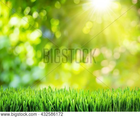 Beautiful bokeh sunny nature background and green grass in foreground. File contains grass clipping path. It is possible to place your product.