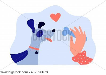 Hand Of Female Dog Owner Holding Bone For Cute Puppy. Woman Giving Treat To Domestic Animal Offering