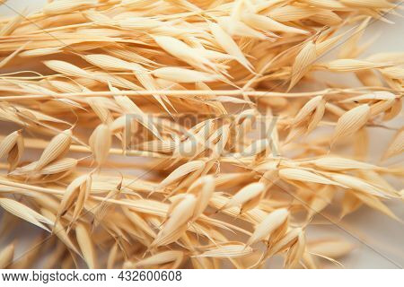 Oat Ears On White Background. Oat Plant Close Up.