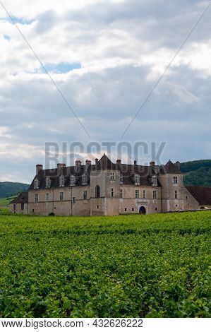 Green Grand Cru And Premier Cru Vineyards With Rows Of Pinot Noir Grapes Plants In Cote De Nuits, Ma