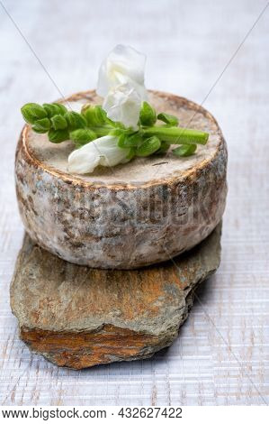 Cheese Collection, Matured Cow Cheese With Mold Tommette De Savoie From France, Cheese Made In Alpin