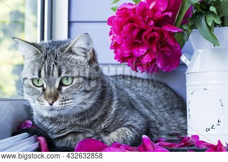 Cute Tabby Cat With Green Eyes With A Bouquet Of Peonies. Cozy Morning At Home. Aggravation On Flowe