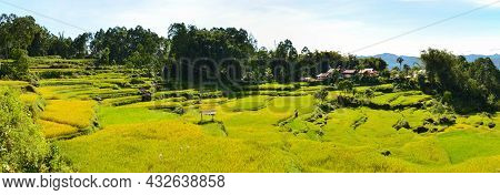 Rice Terraces In Indonesia. Terrace Rice Fields, Indonesia. Green Cascade Rice Field. Panoramic Phot