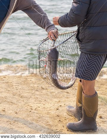 Asian Man Wear Fishing Boot And Short Using A Landing Net And Fish Lip Gripper To Catch The Catfish