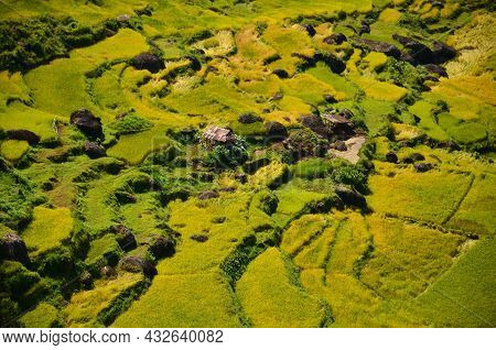Indonesia Rice Field, Food Of Cereal Grain Corn Bran Wheat Oats Foodgrain. With Landscape And Rice T