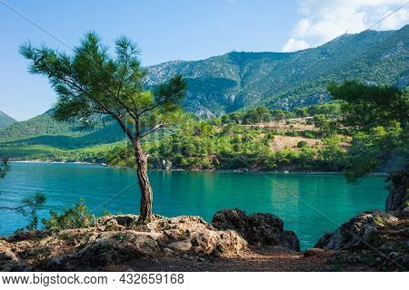 Young lonely pine tree is standing in sunlight on rocky coast of Mediterranean sea, Turquoise water and mountains on background, Picturesque nature of Turkey in beautiful sunny day