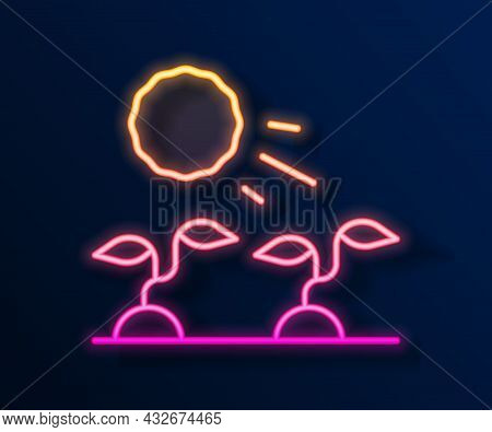 Glowing Neon Line Plant Sprouts Grow In The Sun Icon Isolated On Black Background. Seedling Concept.