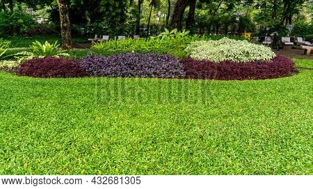 Fresh Green Grass Smooth Lawn As A Carpet With Curve Form Of Bush, Shrubs, Trees On Background, Good
