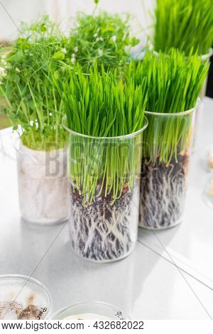 Germination And Energy Analysis Of Plants On Table In Laboratory