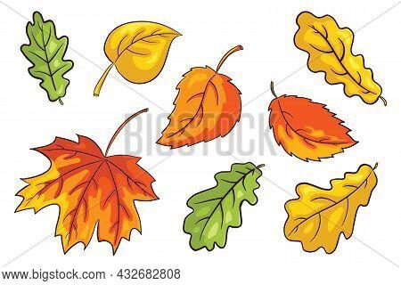 Hand Drawn Autumn Leaves Set. Collection Of Forest Foliage. Oak, Maple And Hazel Leaf. Autumn Decora
