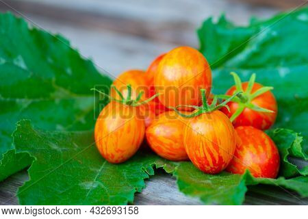 Many Striped Tomatoes Lie On A Wooden Background