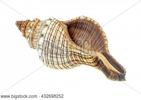 The Shell Of A Sea Snail On A White Isolated Background