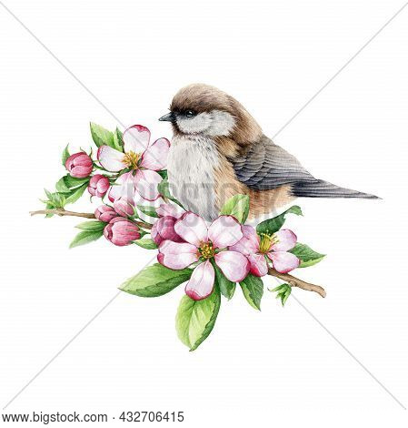 Titmouse Bird With Spring Pink Flowers. Watercolor Illustration. Hand Drawn Floral Nature Image. Chi