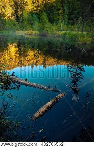 Marsh Lake Felling Of Trees In Smooth Water Calm Majestic Highland Environment Natural Space Vertica