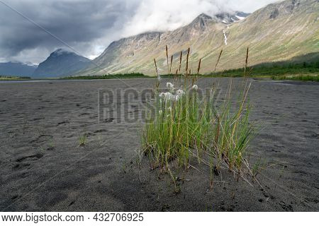 A Grass Turf On The Sandy Valley Floor With Many Footprints In It In Rapadalen In Sarek National Par