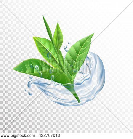 Leaves In Water Splash. Realistic Tea And Citrus Foliage In Cold Aqua Wave. Transparent Fluid Drople