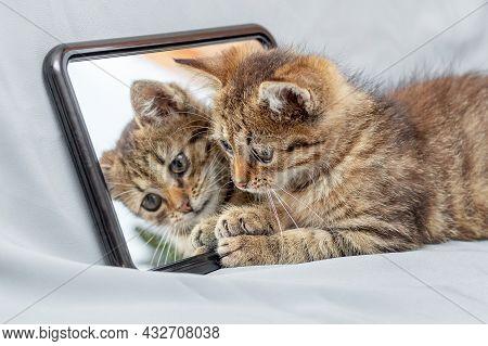 Little Cute Striped Kitten Sitting Near The Mirror, The Kitten Is Reflected In The Mirror