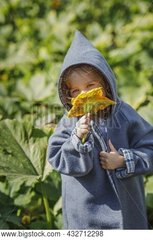 A Girl In A Hooded Coat Holds A Pumpkin Flower In Her Hand And Sniffs It. Walk Children In Nature In