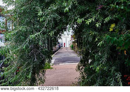 A Pendulous Willow Leaved Pear Tree (pyrus Salicifolia - Pendula) Forms A Tunnel On The Pavement. Al
