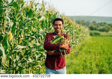 Happy Man Afro Farmer Looking At Camera And Holds The Corn Cob In His Arms. Organic Farming, Food An