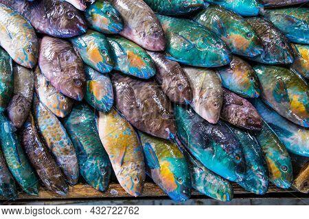 Fresh fish on open fish market in Hurghada city, Egypt.