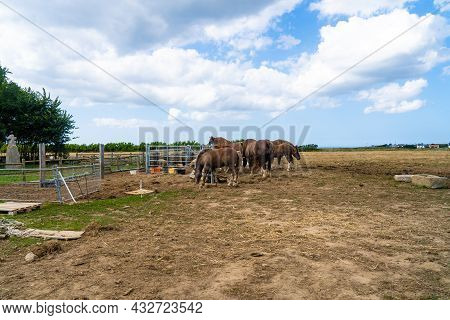 Theme Of Farming, Animal Husbandry And Horse Breeding In France Is Brittany Region. Bretagne Horses