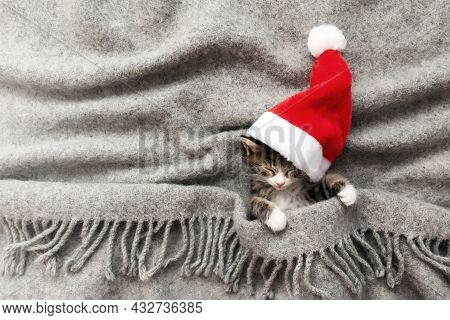 Christmas Kitten In Red Santa Hat Sleep With Eyes Closed, Covered With Blanket