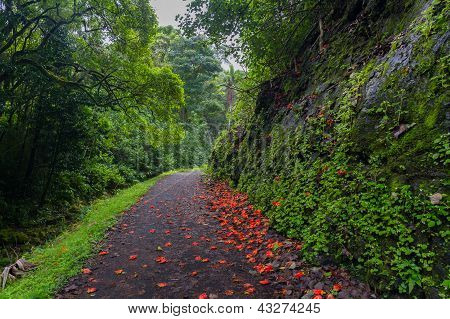 Flower-strewn Path Through Lush Forest