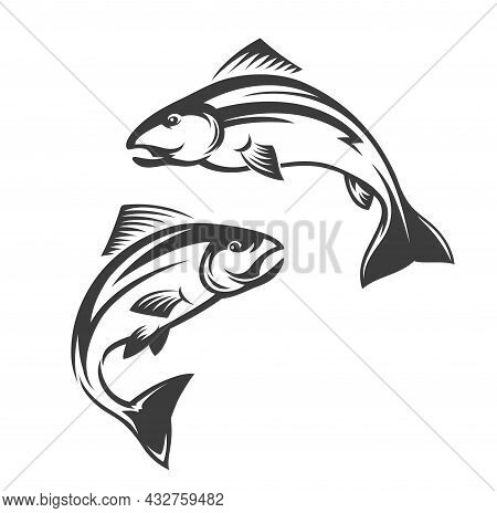 Salmon Fish Vector Icon Of Leaping Coho, Chinook, Atlantic And Pink Salmon. Isolated Sea And Ocean S