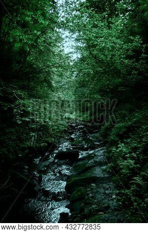 A Cloudy Day In A Dense Wild Forest, A Small Stream Flows Through The Stones On The Slopes Of The Mo