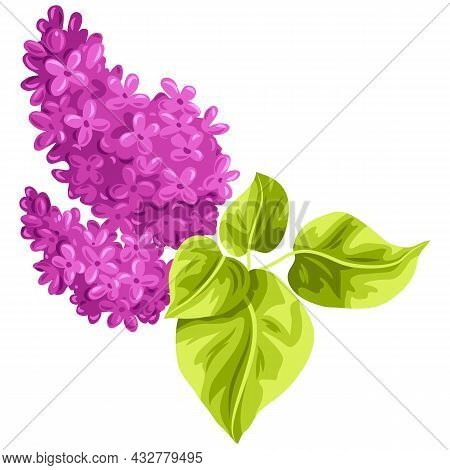 Illustration Of Stylized Lilac Branch With Leaves. Decorative Summer Plant.