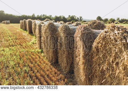 Rural Landscape Field Meadow With Hay Bales After Harvest. Hay Roll Bales On Countryside Field. Beau