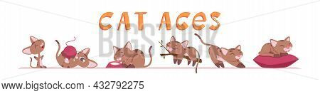 Cat Growing. Kitten Funny Characters In Various Poses Domestic Animals Playing Exact Vector Illustra