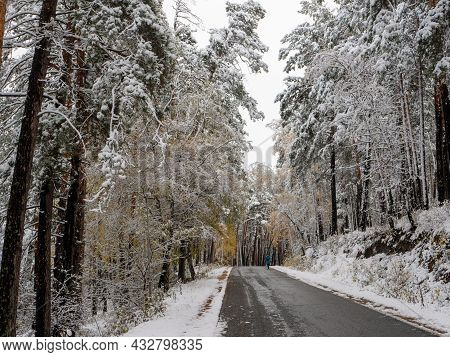 Forest In The Snow. Winter Picture. The Girl Walks Along The Road Through The Coniferous Forest. Che