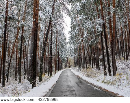 Forest In The Snow. Winter Picture, Snow Falls From Tree Branches To The Ground. The Road Goes Deep