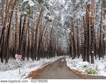 Forest In The Snow. Winter Picture. The Road Goes Deep Into The Coniferous Forest. The Crowns Of The