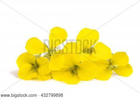 Yellow Wallflowers Isolated On A White Background