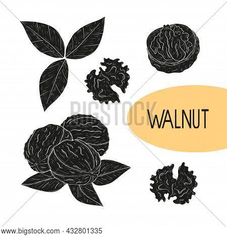 Walnut. Fruit, Core, Leaf Black Silhouette On White Background Set