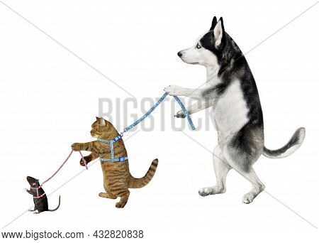 A Dog Husky Keeps On A Leash His Beige Cat Which Keeps His Black Rat On A Leash. White Background. I