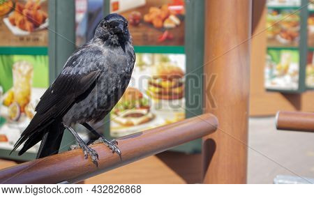 Close-up View Of A Black Bird, A Crow Standing On A Wooden Railing. Raven Is Seated On The Fence.
