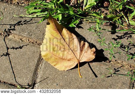 Yellow Leaf On The Ground. Autumn, Leaf On The Cobbled Pavement. Background, Texture, Design. Yellow