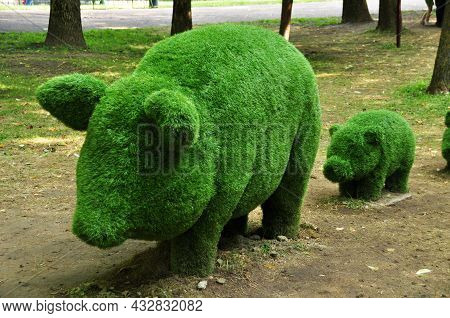 Topiary. Green Sculptures Of A Large Pig And A Small Pig. Urban Sculpture. 02 August 2021, Smolensk,